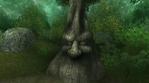 護りの樹林・巨樹前